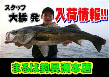 Photo_11_2